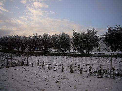 Montemarciano e la neve nella campagna