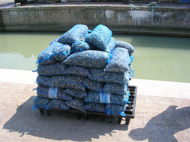 Il pescato in eccesso sequestrato al porto di Senigallia dalla Guardia Costiera