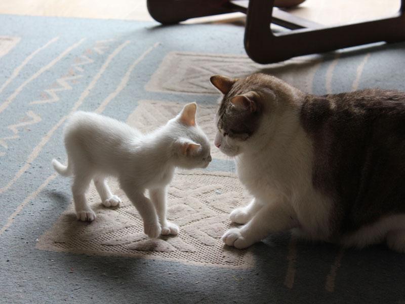 E Se Arriva Un Altro Gatto Consigli Utili Se La Famiglia Aumenta