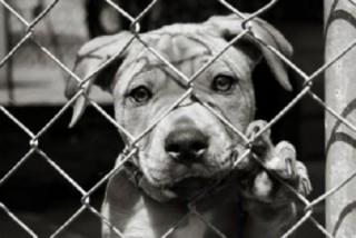 Cucciolo in gabbia