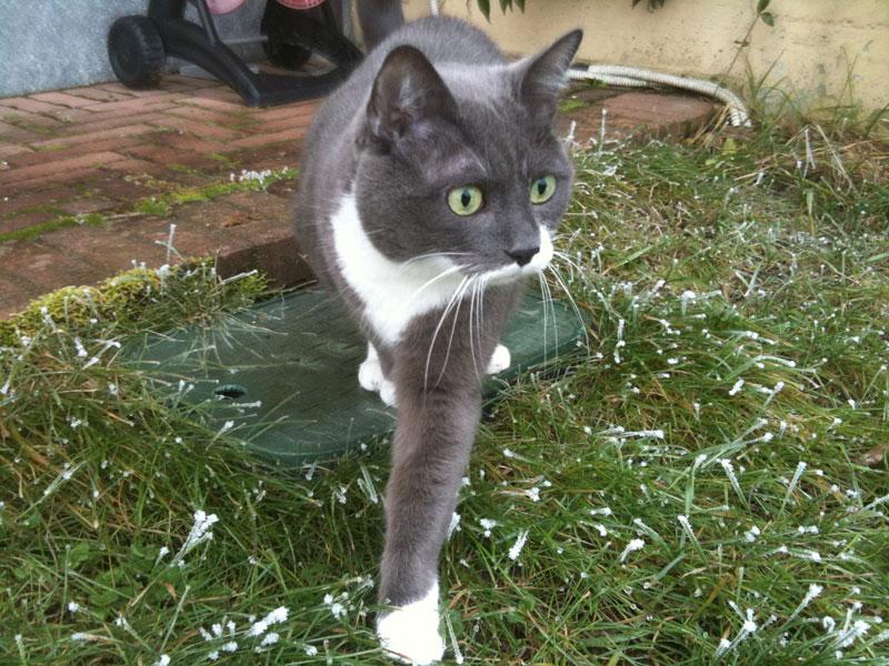 Un gatto si avventura nell'erba