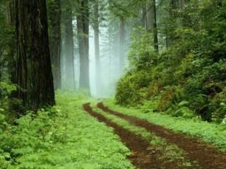 Foreste nelle Marche