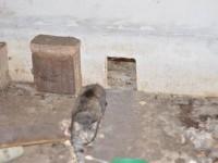 Appello adozione per 24 gatti a Fano
