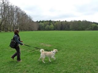 Cani e animali in parchi ed aree verdi