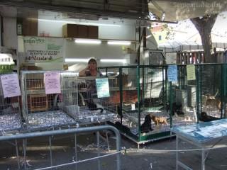 Vendita di animali alla fiera di Sant'Agostino 2012 di Senigallia: lo stand di Hobby Zoo