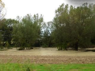 Fiume Nevola in piena a rischio esondazione, visto dalla Corinaldese