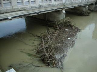 I residui sul fiume Misa di Senigallia dopo alcune piogge
