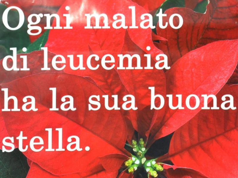 Stella di Natale AIL 2012