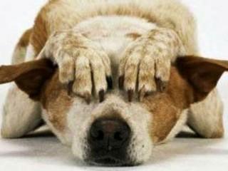 Animali terrorizzati per i botti di Capodanno