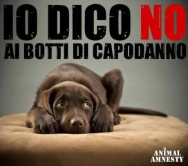 Animal Amnesty contro i botti di capodanno