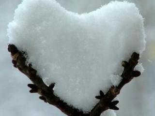 Neve caduta su un ramo (foto di repertorio)