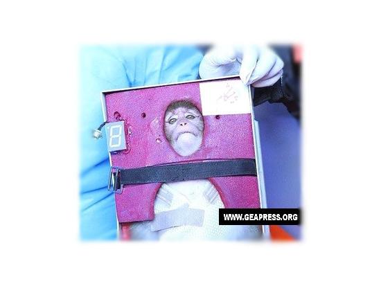 La scimmia lanciata nello spazio dall'Iran