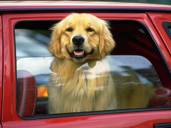 Abbandono di animali, maltrattamenti, cani chiusi in macchina, caldo, sole, auto