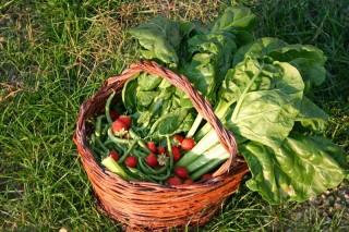 Si torna a coltivare l'orto