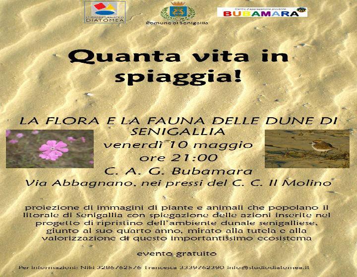 L'incontro di Diatomea al Bubamara-Manifesto