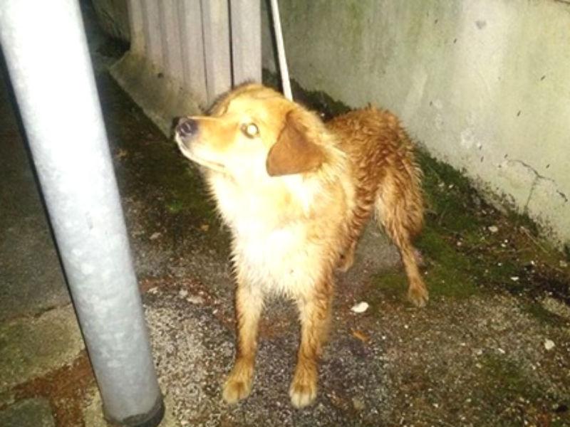Il cane ritrovato nei pressi di Borgo Mulino