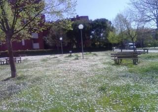 Senigallia, Parco della Pace (ex Piazza d'Armi)-foto di Giovanna Ceciliani