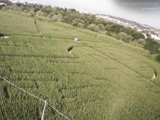 Il labirinto nel mais a Senigallia fotografato dall'alto