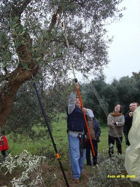Il corso di potatura degli ulivi 2010 (Foto M. Betti) a Scapezzano