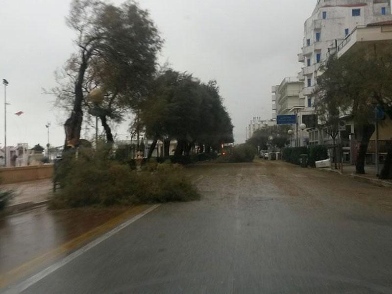 Maltempo a Senigallia: alberi caduti sul lungomare