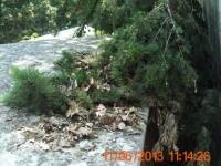 Ramo spezzato nel cimitero di Senigallia