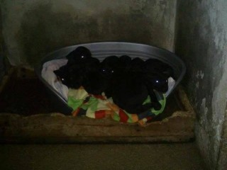 I cuccioli al canile di Senigallia