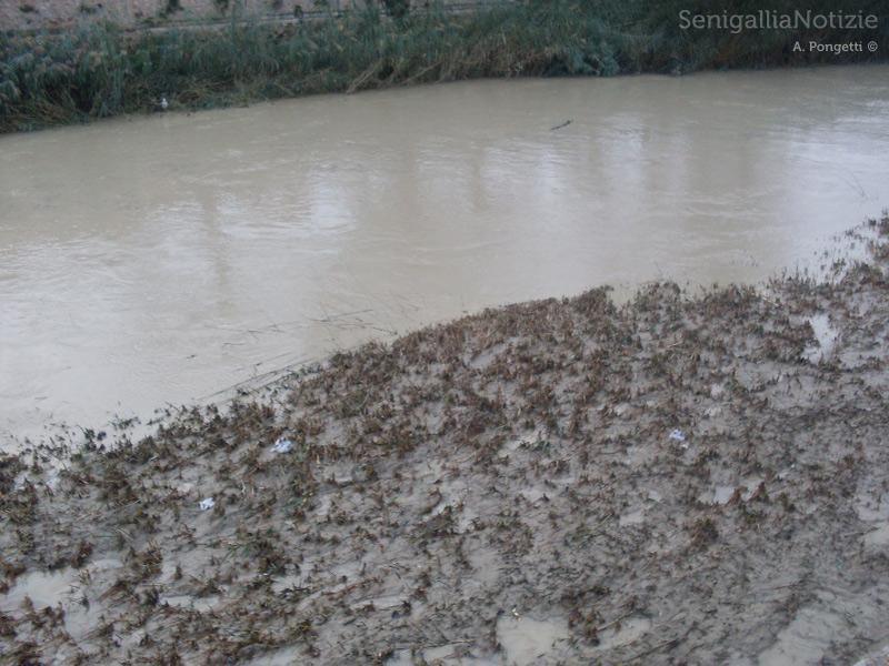 Il fiume Misa tra sabbia e fango per la piena dell'11 novembre 2013