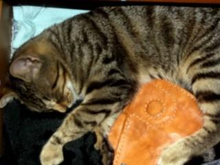 La gattina Tess