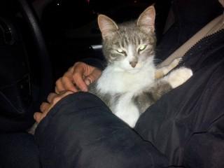 Gatto ritrovato in via Cellini a Senigallia