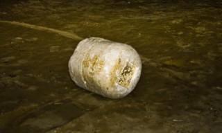 Una delle pietre trovate in spiaggia a Senigallia (Foto Buontempi)