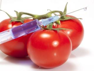 Organismi geneticamente modificati (Ogm)