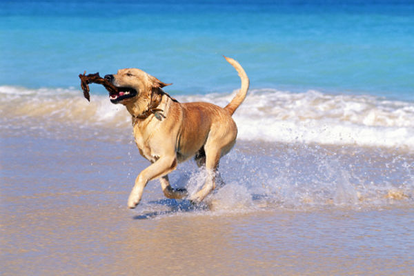 Animali domestici spiaggia