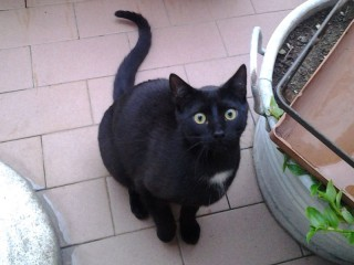 Il gatto smarrito: Mr. Black