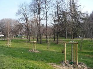 Verde urbano, alberi, politiche ambientali