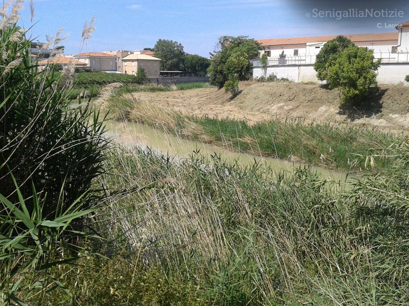 L'ultimo tratto del fiume Misa, quello che attraversa la città di Senigallia, è oggetto in queste ore di alcuni interventi di pulizia e taglio della vegetazione disposti dalla Provincia di Ancona