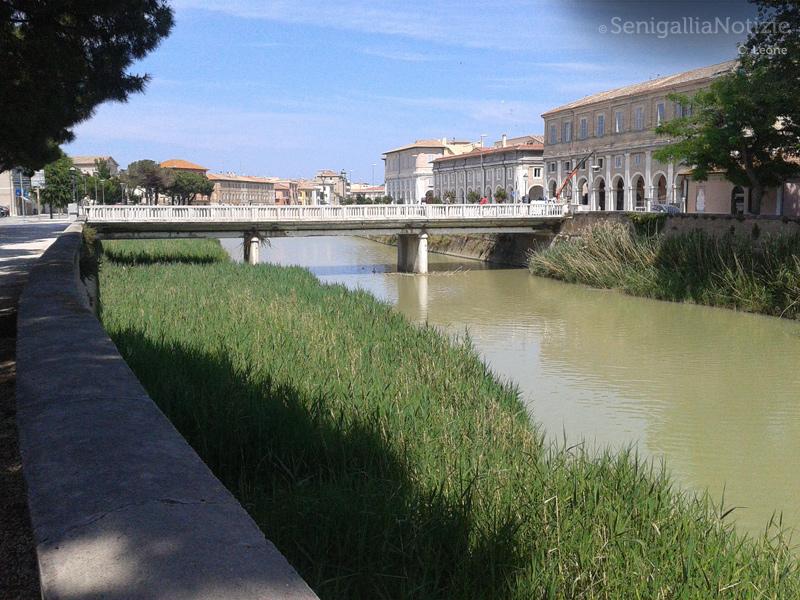 L'argine del fiume Misa in zona ponte Garibaldi
