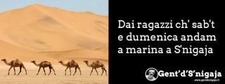 Gent'd'S'nigaja - I cammelli