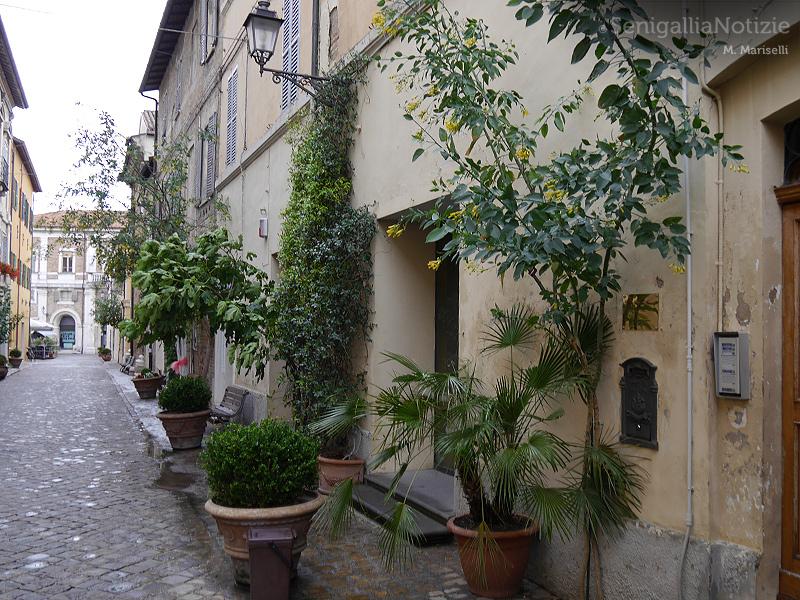 Piante in via Cavour, a Senigallia
