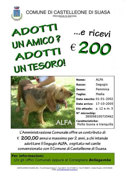 Incentivi a Castelleone di Suasa per adozione cani