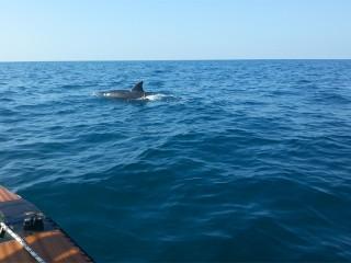 L'incontro con i delfini a largo di Senigallia