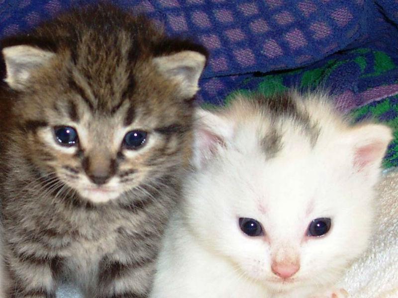 Il Cucciolo Di Gatto Primi Consigli Senigallia Notizie
