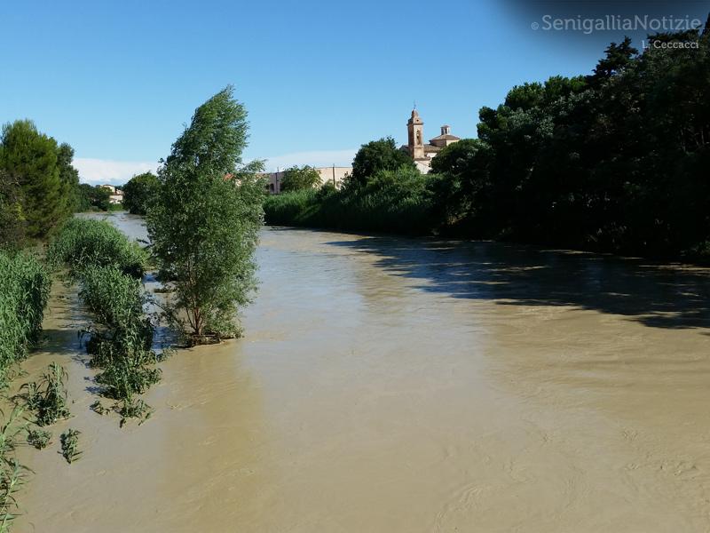 Il giorno dopo il maltempo del 29 luglio: il fiume Misa ancora in piena
