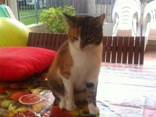 gatto Matilde