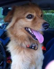 Il cagnolino ritrovato a Roncitelli di Senigallia