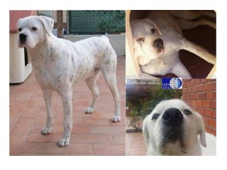 Il cane smarrito a Senigallia, Benny