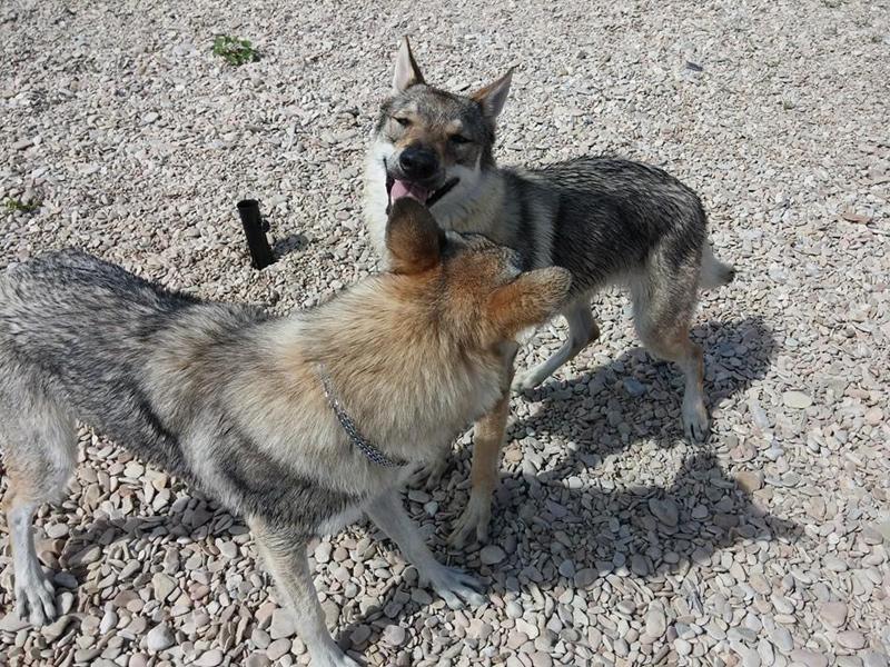 Cani in spiaggia a Senigallia. Foto di Fabiola Falaschi