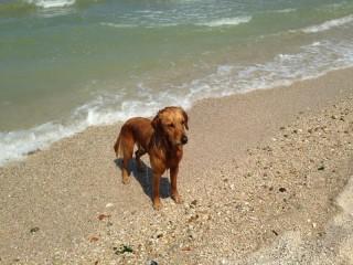 Cani in spiaggia a Senigallia. Foto di Scooby.Doo Beach