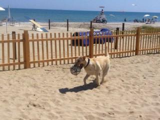 Cani in spiaggia a Senigallia. Foto di Valentina Ciaccini