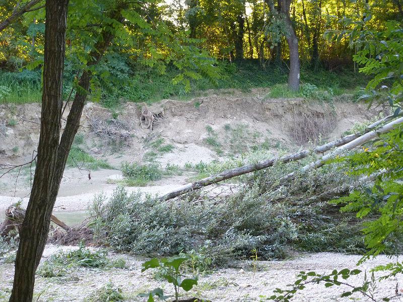 L'erosione degli argini del fiume Misa ad agosto 2014