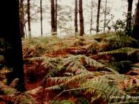boschi lungo il Cammino